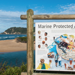 20 New Marine Protected Areas Proclaimed in South Africa