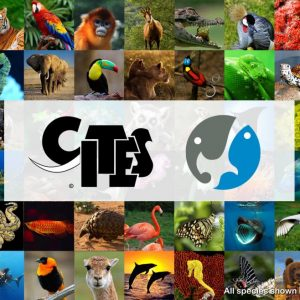 CITES 2013 Offers Protection for Shark and Manta Species