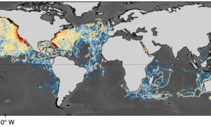 Industrialised fishing overlaps threatened shark 