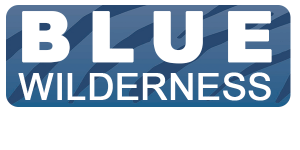 Shark Research Unit – Blue Wilderness