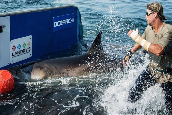 Pro shark wrangler