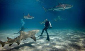 Top 10 universities to study sharks