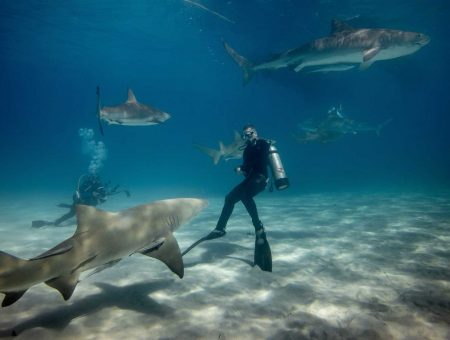 Top 10 universities to study sharks
