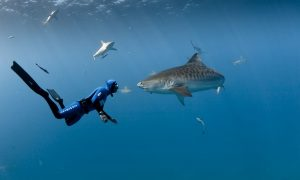 15 Skills you need to work with sharks