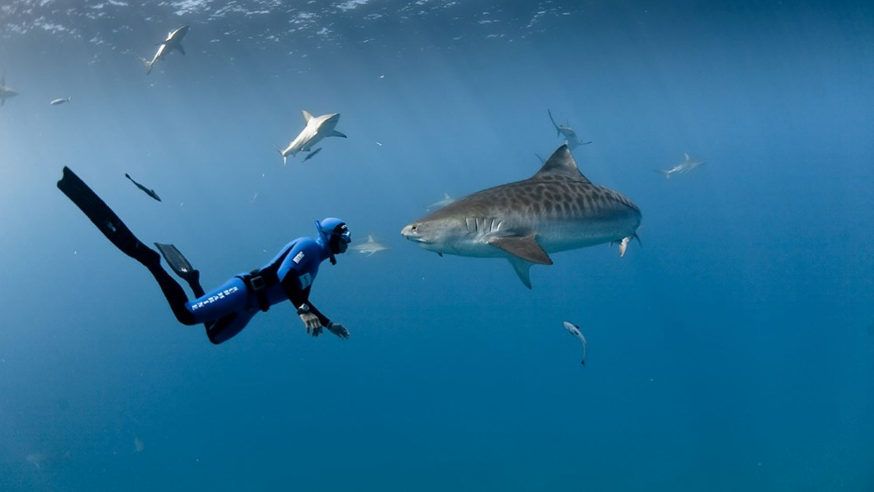 Skills you need to work with sharks
