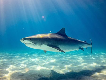 The best shark species to research
