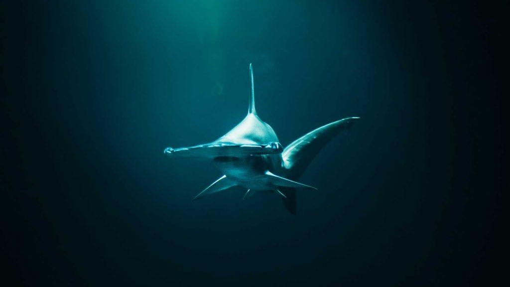 Most endangered shark species