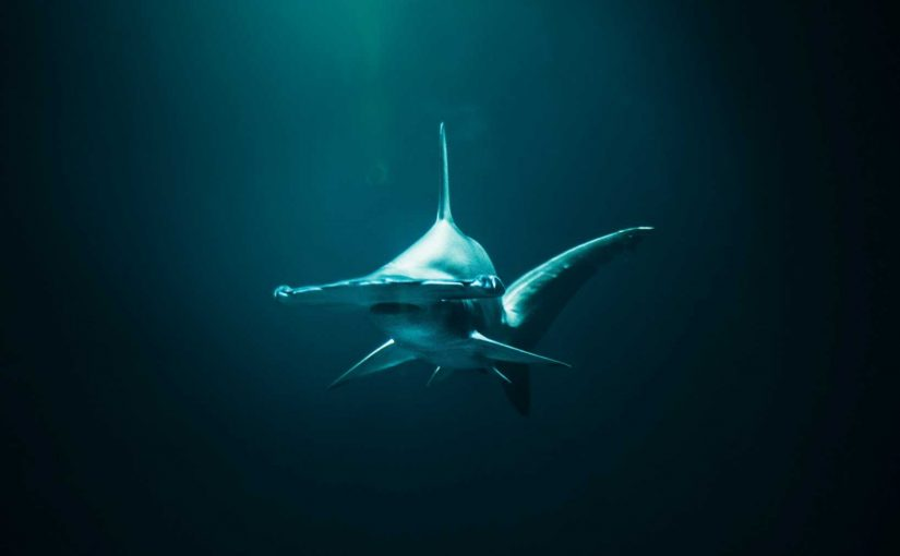 Most endangered shark species