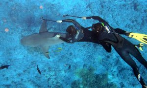 7 Interesting research methods that scientists use to study sharks