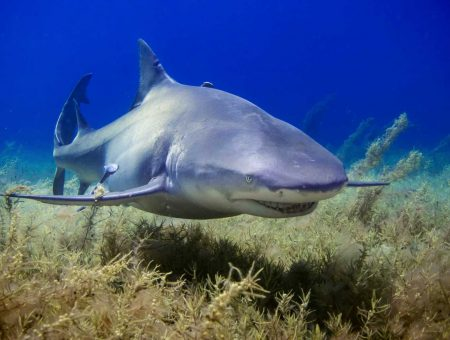 Why shark conservation is important